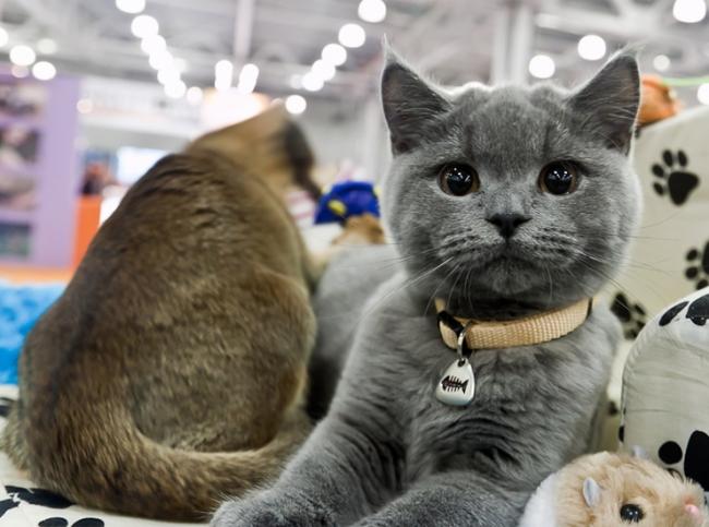 Питомник - лучшее место для покупки кошек