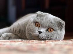 Как организовать свой кошачий бизнес на дому